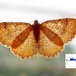 आज की कहानी- तितलियाँ
